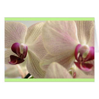 Orchids #1 card