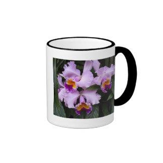 Orchids 46 ringer coffee mug