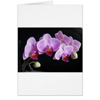 orchids-837420_640 card