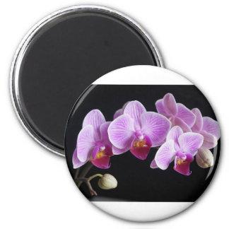 orchids-837420_640 magnet