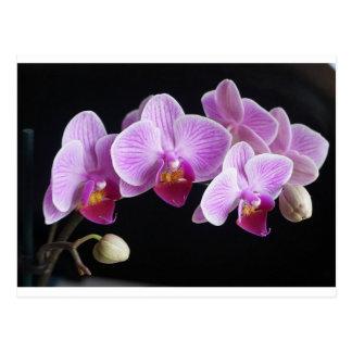 orchids-837420_640 postcard