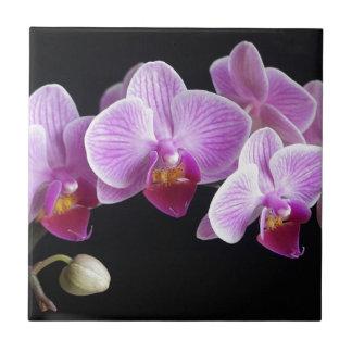 orchids-837420_640 tile