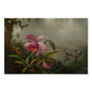 Orchids and Hummingbirds by Martin Johnson Heade Poster