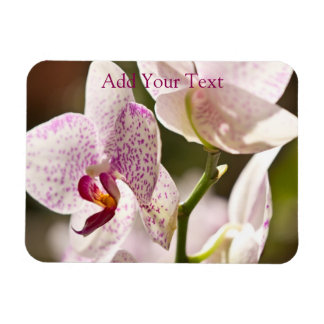Orchids by Shirley Taylor Magnet