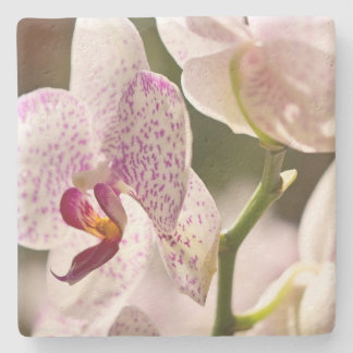 Orchids by Shirley Taylor Stone Coaster
