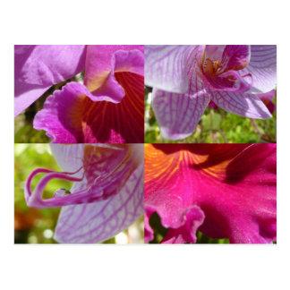 Orchids Cairns Botanic Gardens Postcard