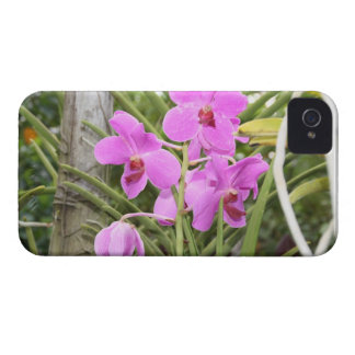Orchids Case-Mate iPhone 4 Case