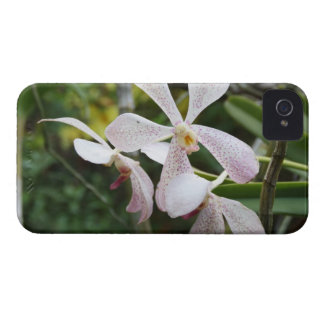 Orchids iPhone 4 Covers