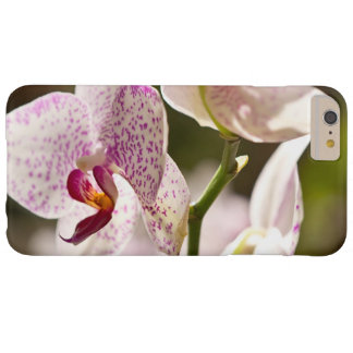 Orchids Barely There iPhone 6 Plus Case