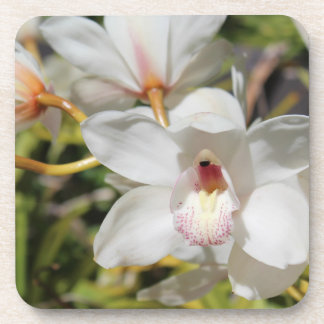 Orchids Coasters