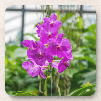 Orchids hard plastic coasters