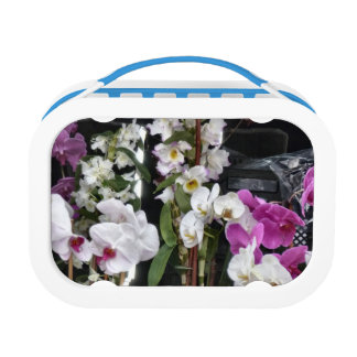 Orchids Lunchboxes