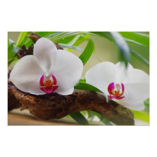 Orchids spa oasis poster