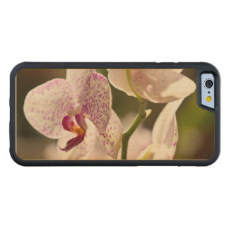 Orchids Carved® Maple iPhone 6 Bumper