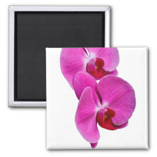 Orchis Square Magnet