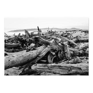 Oregon Coast Driftwood Black and White Print Photographic Print