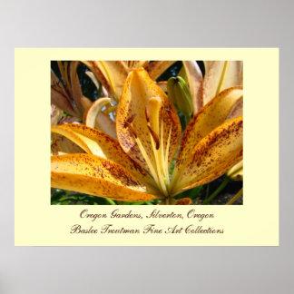 Oregon Gardens Silverton Golden Lily Flowers Poster
