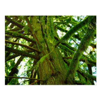 Oregon Green Postcard