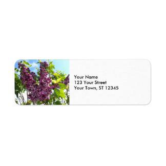 Oregon Lilacs