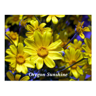 Oregon Sunshine Postcard
