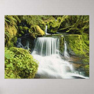 Oregon, Waterfall in Willamette national Poster