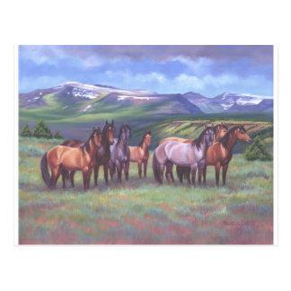 Oregon's Wild Horses Postcard