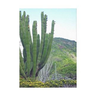 Organ Pipe Cactus Canvas Print