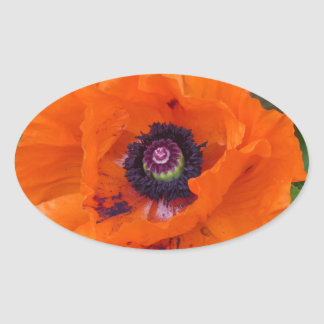 Oriental Garden Poppy Oval Sticker