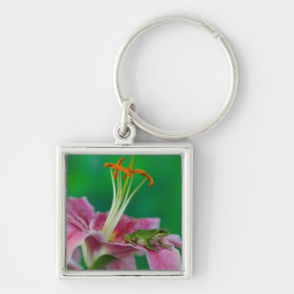 Oriental Lily and Pacific tree frog resting on Silver-Colored Square Keychain