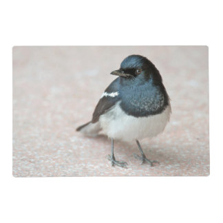 Oriental Magpie-Robin (Copsychus saularis) Laminated Place Mat