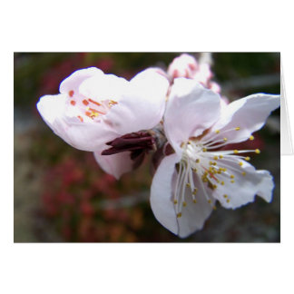 Oriental Peach Bloom Greeting Card