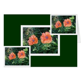 Oriental Poppy #2 Card