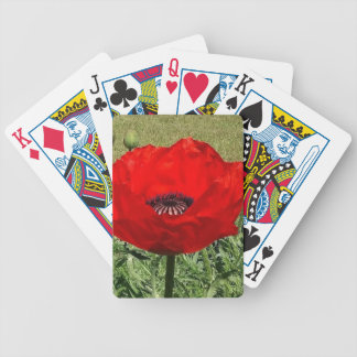 Oriental Poppy Bicycle Playing Cards