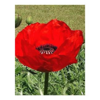 Oriental Poppy Letterhead
