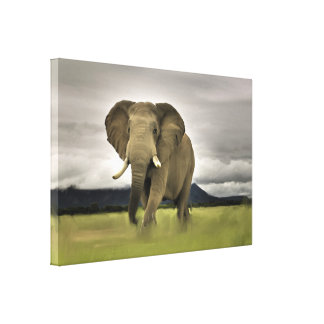 Original Elephant In Long Grass Canvas Print
