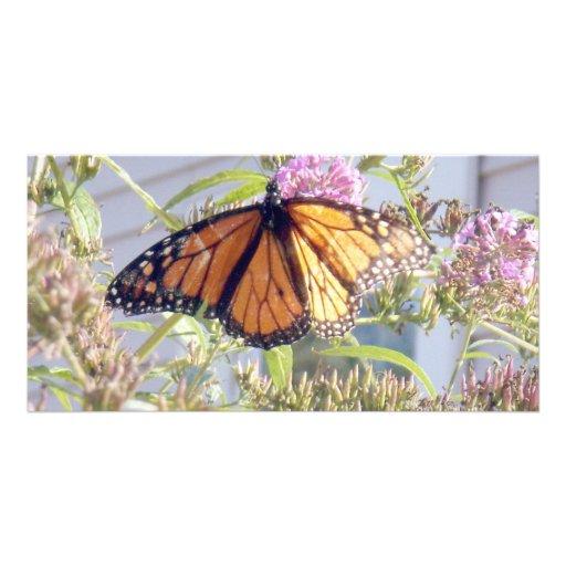 Original Nature Photography Photo Cards