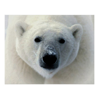 Original Polar Bear Photography Art Poster