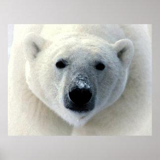 Original Polar Bear Photography Art Poster