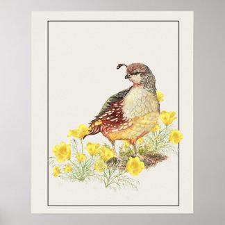 Original Watercolor California Quail Female Bird Poster