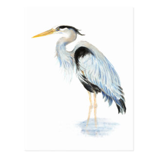 Original watercolor Great Blue Heron Bird Postcard