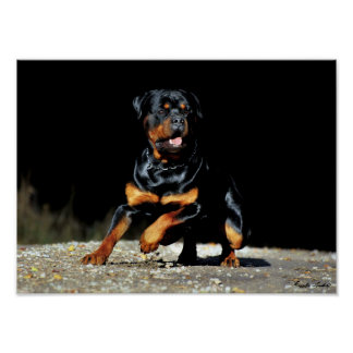 Originals Rottweiler post offices Poster