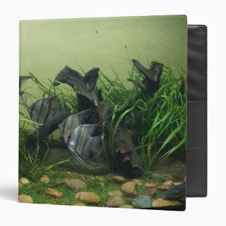 Orinoco Angelfish Binder