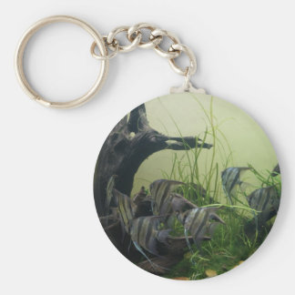 Orinoco Angelfish Button Keychain