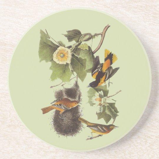 Oriole Audubon Birds Vintage Art Coaster