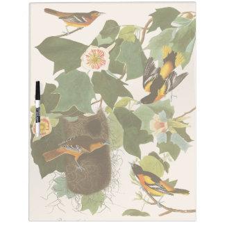 Oriole Birds Wildlife Animal Dry Erase Board