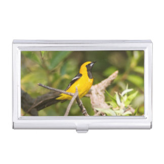 Oriole business card holder
