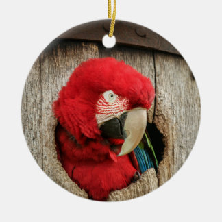 Ornament with green wing macaw parrot in barrel
