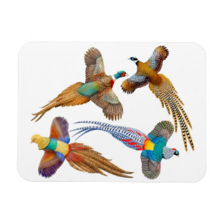 Ornamental Wild Pheasant Birds Premium Magnet