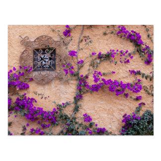 Ornamental window with bougainvillea postcard