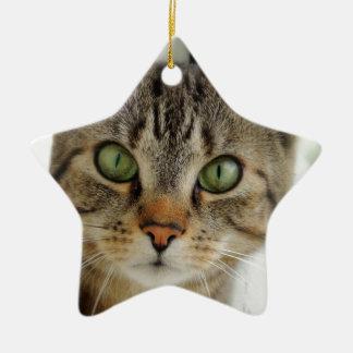 Ornamentation star shaped cat ceramic star ornament